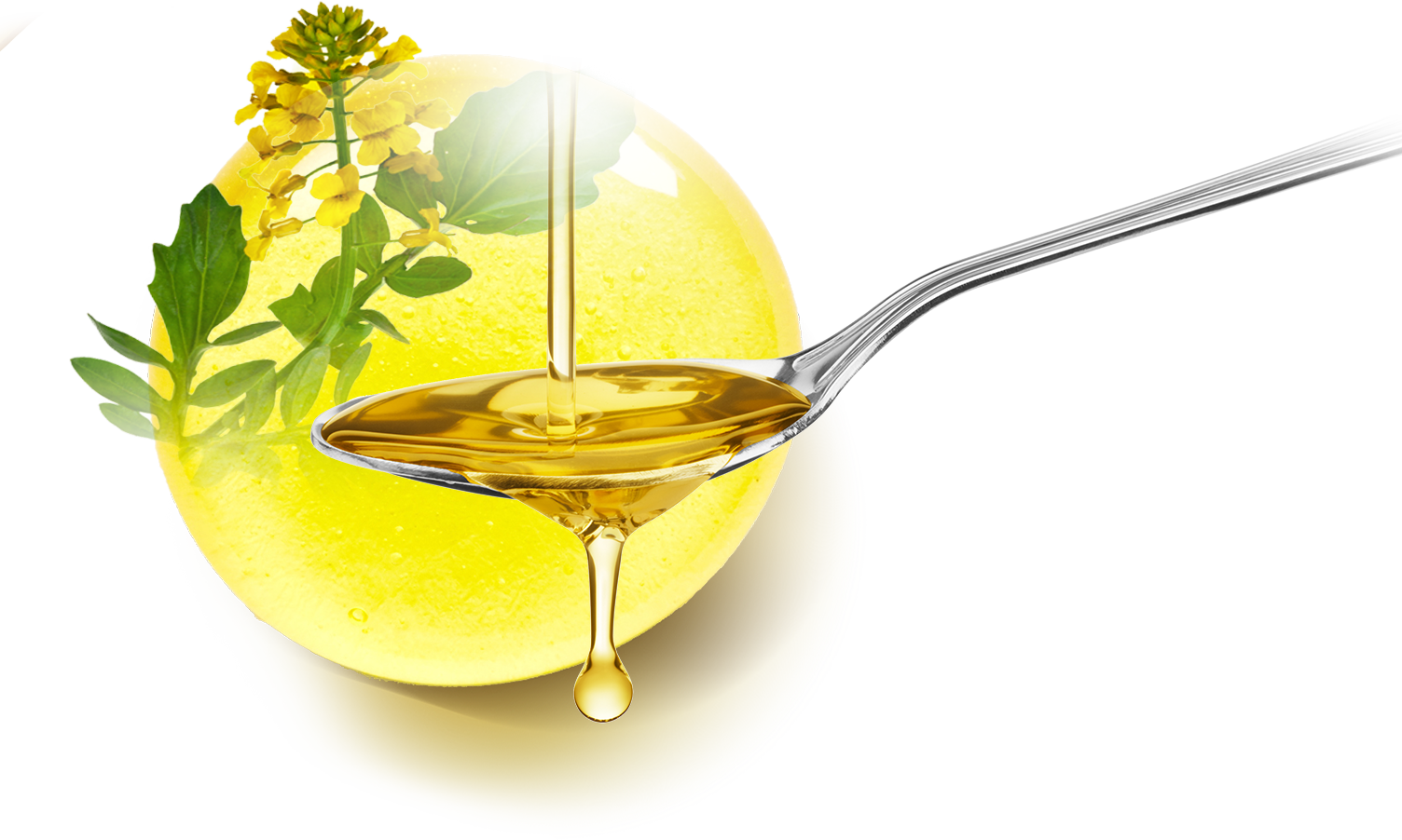 camelina oil - healthiest cooking oils