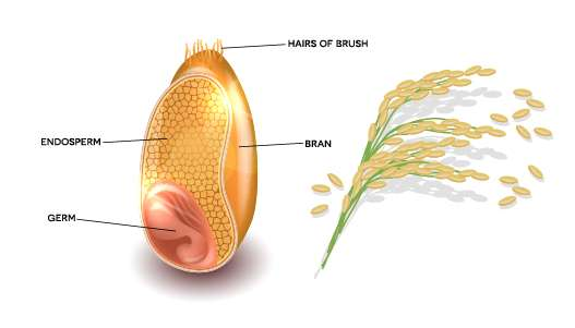 How rice bran oil is made?